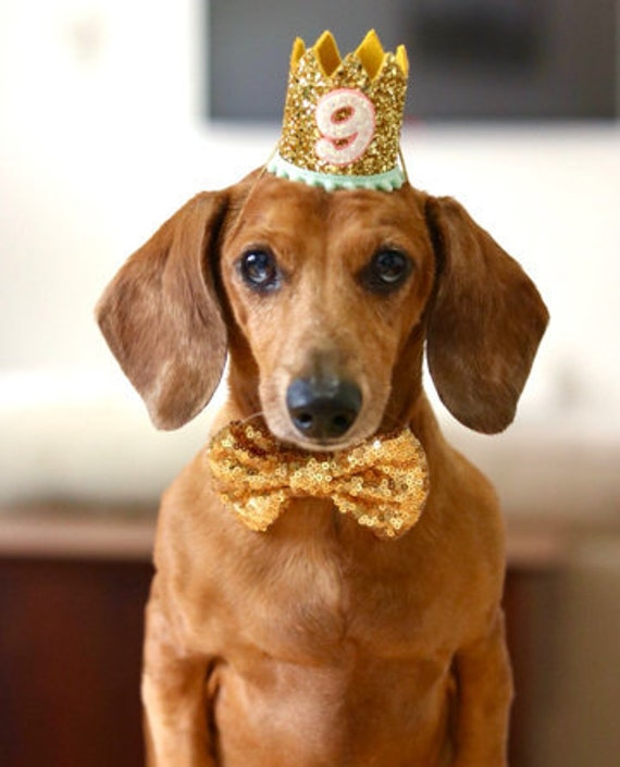 Dog Birthday Hat + Bow Tie || Animal Party Hat || Cat Kitty Puppy Pig Birthday Crown Hat || Add Any Number