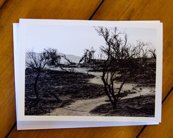 Scorched! Greeting Card