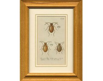 c. 1837 BEETLES PRINT FRAMED - original antique engraving - German insect print in wood frame - old entomology print - framed insects