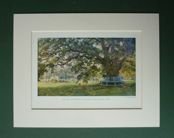 Vintage 1949 Oak Tree Print - Swinford Old Manor - Stately Home - English Nature - Mansion - Countryside - Summer - Matted