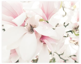 Flower Photography Print, Pink Magnolia Floral Print