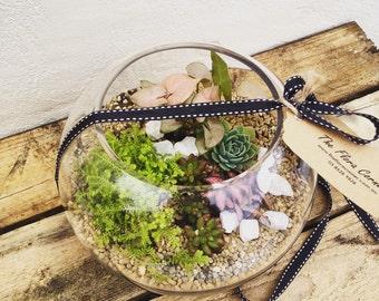 Fishbowl Succulents Terrarium