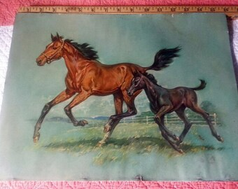 Vintage horse and colt print