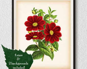 Botanical printable art, Botanical print, Restored illustration, Print Vintage, Antique art, Dahlia print, Wall art print, Flower print, #2