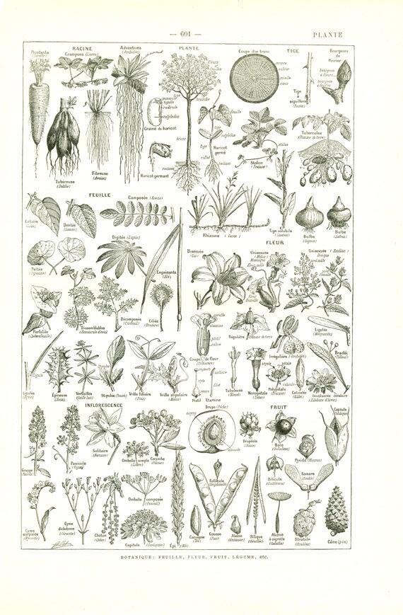 Pflanzen Poster 1936 Vintage Pflanze Kunst Vintage