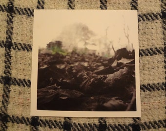 Photo Print: Dead Leaves