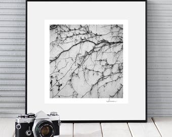 LIVING WALL square black and white bw minimal style nature photography art photography giclee print signed by author