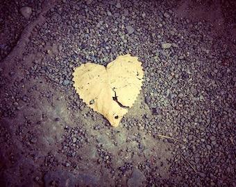 Leaf Heart Print, Leaf Picture, Leaves Photo, Fallen Leaves Photo, Fall Foliage Flower, Flower Picture, Heart Print, Leaves Picture, Heart