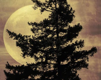 Tree silhouette in front of a full moon photograph,textured clouds,surreal photoart,ethereal art,sepia fine art photography,gift art,fantasy