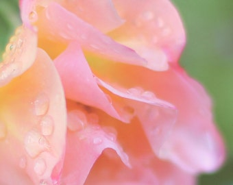 Flower Photography, Fine Art Photography - Pink Rose Macro