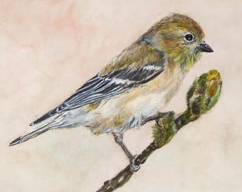 American Goldfinch Star Magnolia Branch Fine Art Print Watercolor from an Original Painting Farmhouse Home Wildlife Decor Woodland Garden