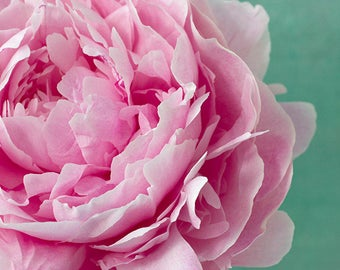 Pink Flower Photography, Peony Wall Art,  Floral Art Print