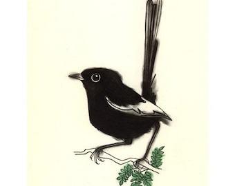 Australian Wren Bird art - 4 for 3 SALE - Little white winged wren - 4 X 6 print