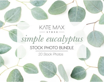Simple Eucalyptus Stock Photo Bundle / Styled Stock Photos / 20 KateMaxStock Flower Branding Images for Your Business