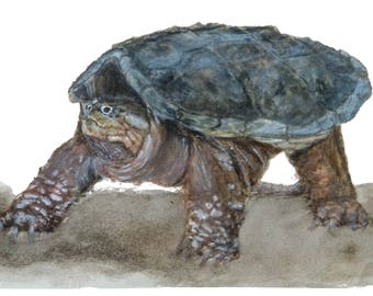 Snapping Turtle Fine Art Print from an original watercolor painting by artist Joy Neasley