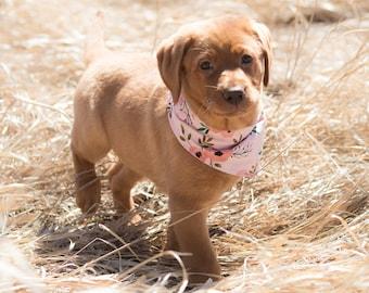 PICK YOUR OWN Dog Bandanas (Choose from over 175 fabrics), bandana for dogs, pet bandana, pet accessory, dog bandanas, dog collar bandana