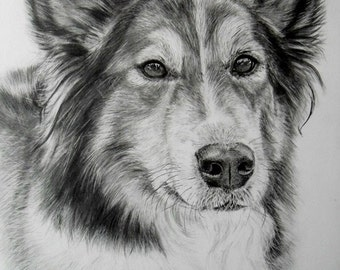 """Realism Graphite Drawing 11""""x 14""""  from your Pet a nice gift for a special ocassion"""