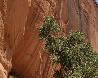 White House Ruins-Scenic Photography-Arizona Photography-Desert Photography-Art-Home Decor-Nature Photography