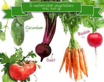 Watercolor Vegetable Clipart for Recipe Scrapbook • Digital Scrapbooking Veggie Clipart • DIY Cookbook Vegetables Embellishment • Images