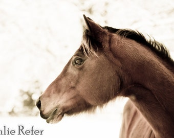 Horse Photography, Horse Art, Sepia Horse, Western Decor