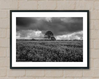 Tree and field, England. Photography Prints, home decor, home prints, gifts, wall art, prints, gift ideas, home accessories, art prints