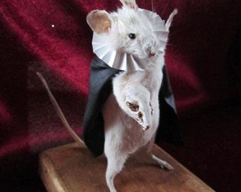 opera taxidermy rat taxidermy rat curiosity