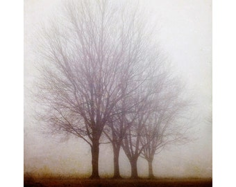 """Tree Photograph, Foggy Forest Print, Nature Photography Print, Landscape Photography, Autumn Rustic Decor, Nature Print """"Standing Still"""""""