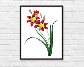 Floral Print / Botanical Print / Floral Clipart / Vintage Flower Illustration Print / DIY / Red Flower Print / Floral Print / Art Print [25]