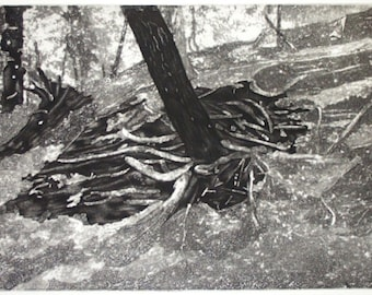 Root Cluster original hand printed etching with aquatint