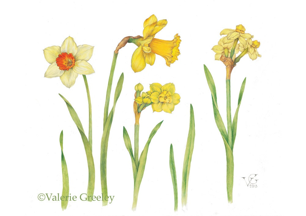 wordsworth and nature asthe daffodils essay Continuous as the stars that shine a close-reading of daffodils' by william wordsworth the poem essay about comparison of daffodils and the prelude by wordsworth.