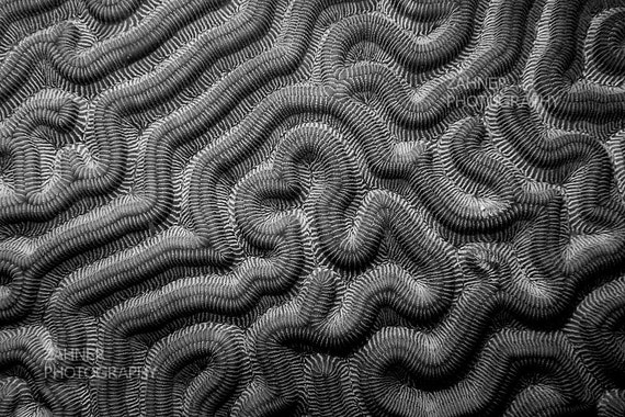 Monochrome Art Black and White Home Decor Photograph of Coral Labyrinth #2 Underwater Photography Nautical Decor Print Masculine