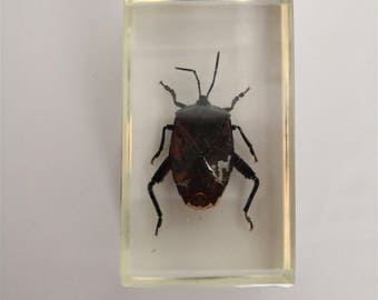 resin insect inclusion-kind pin vintage cabinet of curiosities