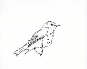 Skizzenbuch Verkauf - Vogel #20 Original Tuschezeichnung - 8 x 10 Songbird Original-Kunst