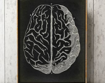 Anatomy Print, Brain Print Black, Brain print, Anatomical drawing, Aged Anatomy Poster, Scientific Drawing, Medical Wall Art, Doctor