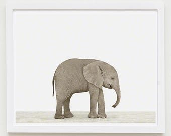 Baby Elephant Animal Nursery Art Print. Baby Elephant. Safari Animal Wall Art. Animal Nursery Decor. Baby Animal Photo.