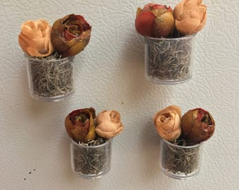 4-Pack • Miniature Rose Planter Magnets