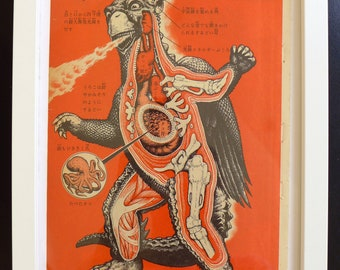 Japanese Monster GAPPA KAIJU ANATOMY vintage print from 1970, part of the Godzilla series, Framed
