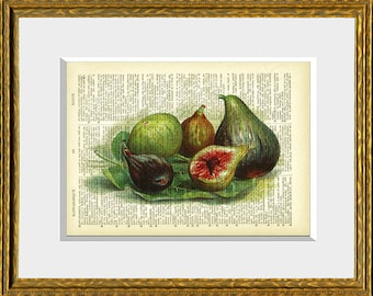 FIGS recycled book page art print - an antique dictionary page with a retooled antique fruit illustration - upcycled kitchen vintage
