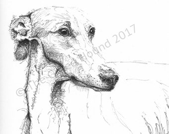 Custom portrait/gift Whippet, pen and ink drawing