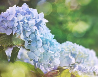 Spring Flower Photography - Hydrangea 2 -10x14 fine art print - blue green yellow lavender pastel floral bokeh cottage chic home decor