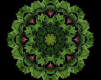 All Love Surrounds You - Bleeding Hearts Flower Mandala