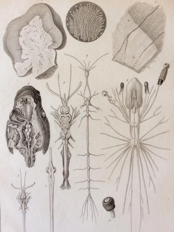 Fein Vergleichende Anatomie Labor Galerie - Anatomie Von ...