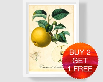 Yellow Apple Art Print, Botanical Art Print, Antique Apple Illustration, Apple Wall Art, Fruits Wall Art, Apple Poster, Apple Kitchen Decor