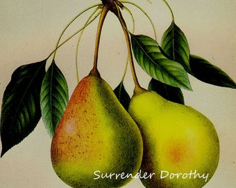 Tyson Pear Prestele Vintage Agriculture Poster Print  Botanical Lithograph To Frame 165