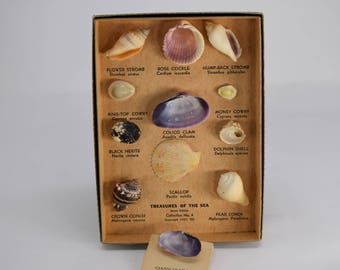 Shell Collection Copyright 1953 Treasures of the Sea Junior Edition Collection No. 4 Vintage Boxed Including One Aditional Bonus Shell
