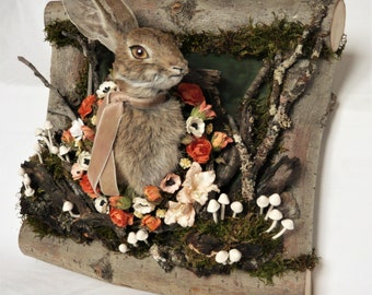 Velveteen Spring, Wild Rabbit Taxidermy art frame, cruelty free, ethically sourced