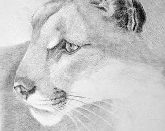 Cougar Graphite pencil on paper