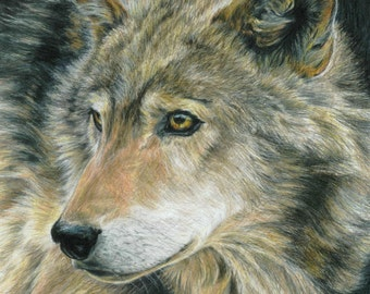 Wolf Art CURIOUS EYES by Carla Kurt Signed Wolf Print 11 x 14