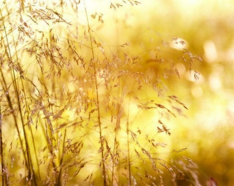 Nature Photography, Grasses, Meadow, Yellow, Sunny, Fine Art Print , Home Decor.