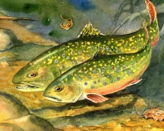 Brook Trout in Love Watercolor fish art print Cottage Decor by Barry Singer